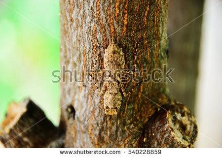 Stemonitis Slime Mold High Power Microscopic Stock Photo 17687236.
