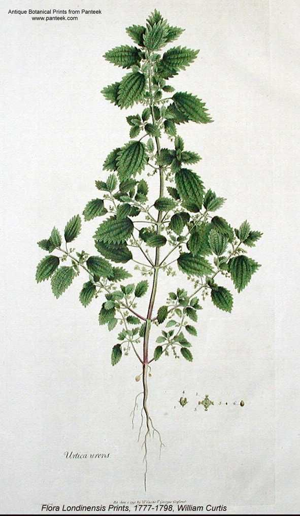 1000+ images about tattoo // plant illustrations. on Pinterest.