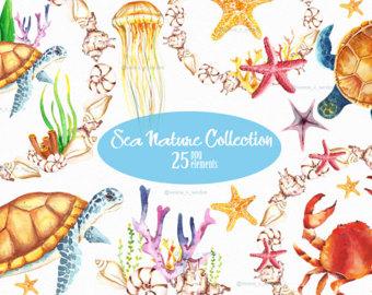 Jellyfish clip art.