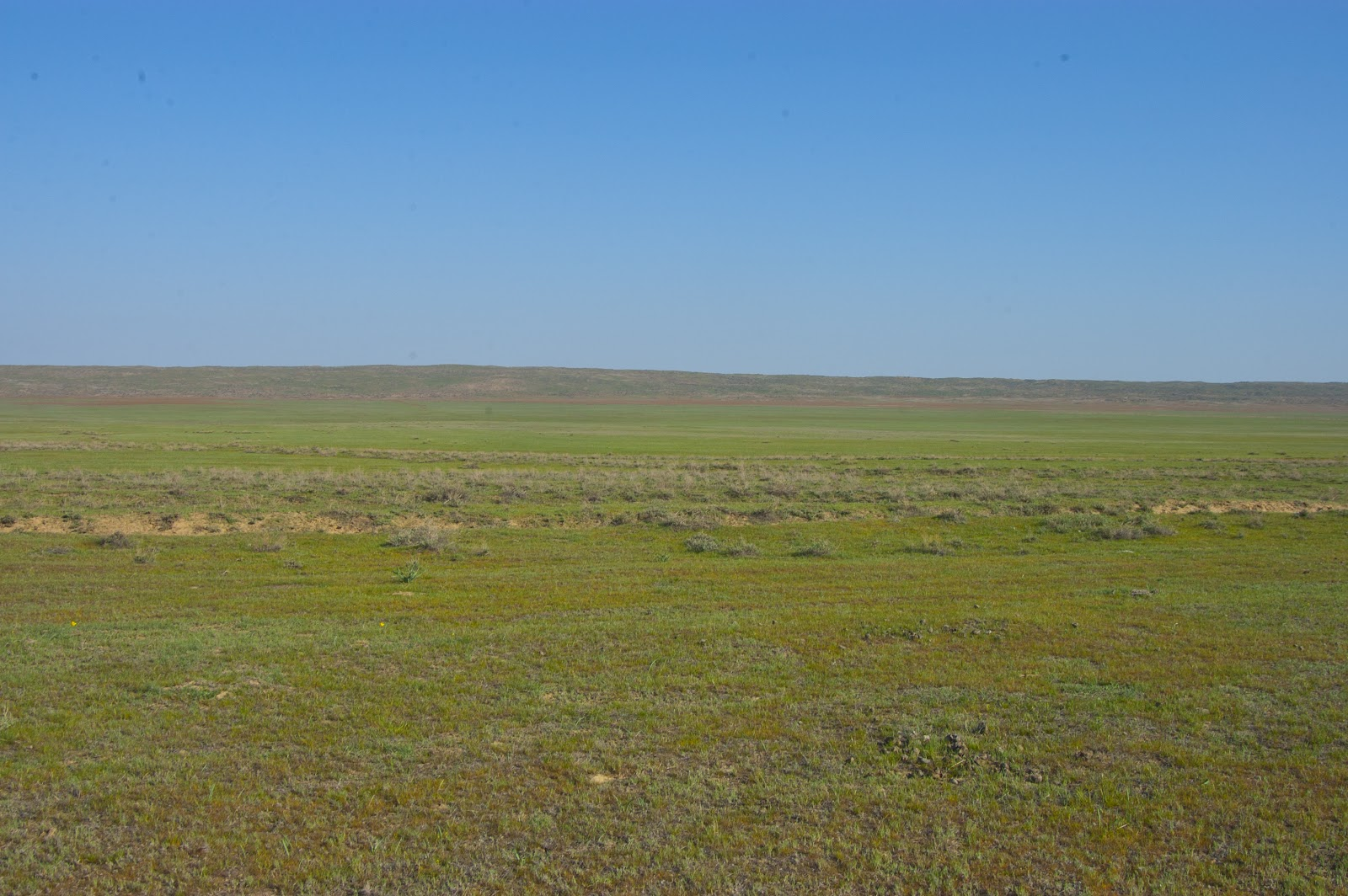 ClipArt: Steppe.