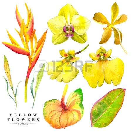 554 Strelitzia Stock Illustrations, Cliparts And Royalty Free.