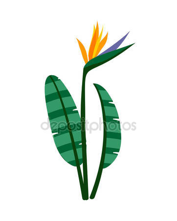 Strelitzia Stock Vectors, Royalty Free Strelitzia Illustrations.