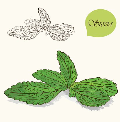 Stevia Leaf Clip Art, Vector Images & Illustrations.