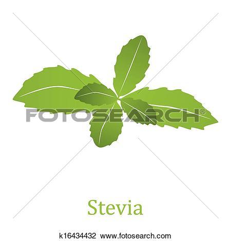 Clipart of Stevia rebaudiana (vector illustration) k16434432.