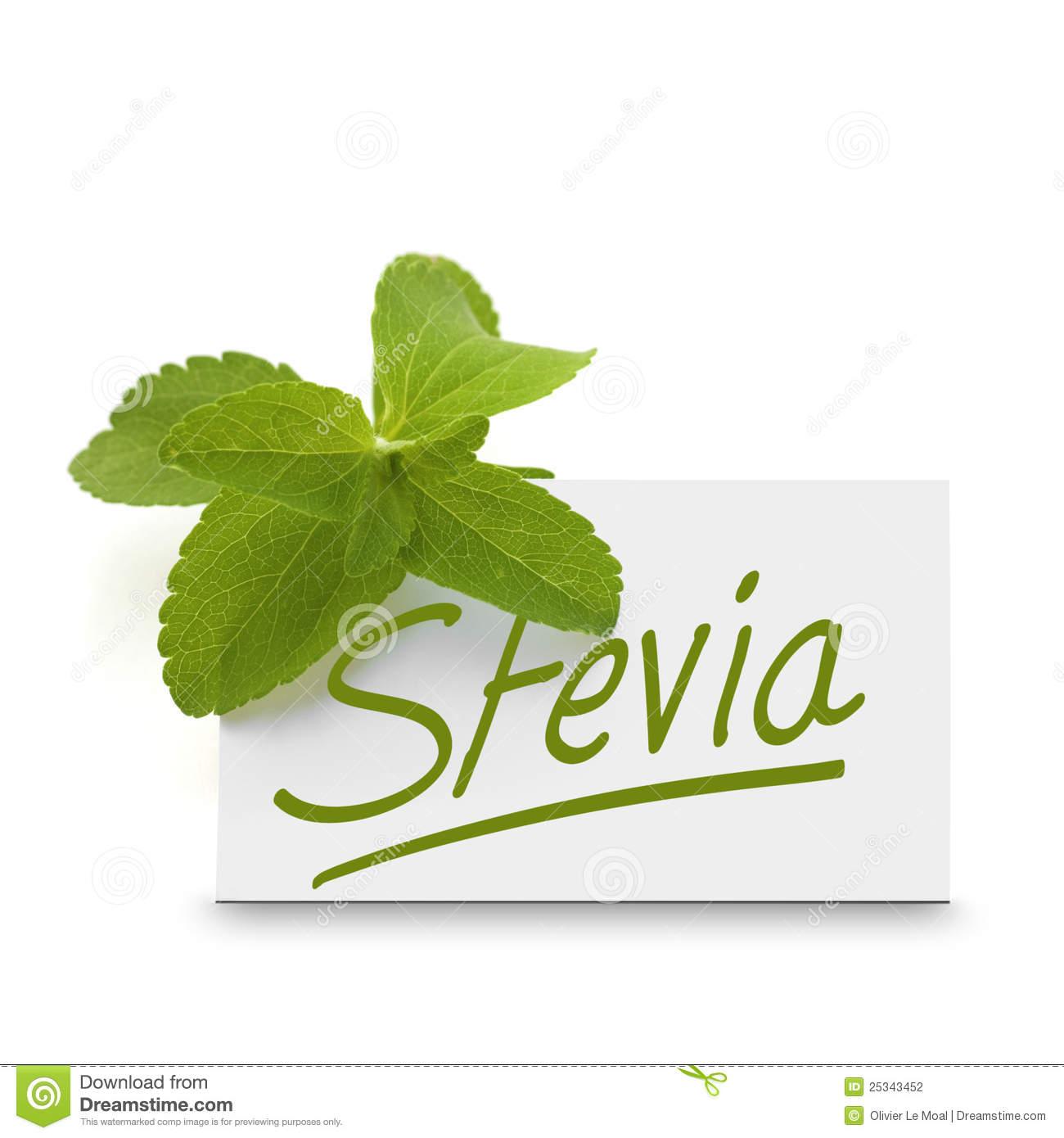 Stevia Rebaudiana Over White Stock Photography.