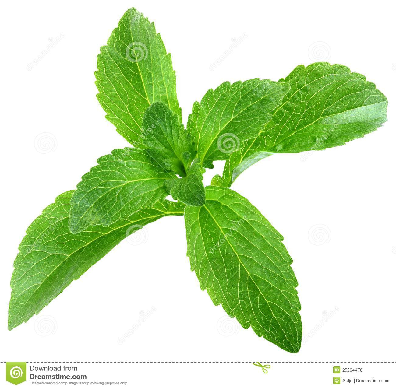 Stevia Rebaudiana Stock Photos, Images, & Pictures.