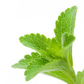 Stock Image of leaves of stevia rebaudiana over a card where it is.