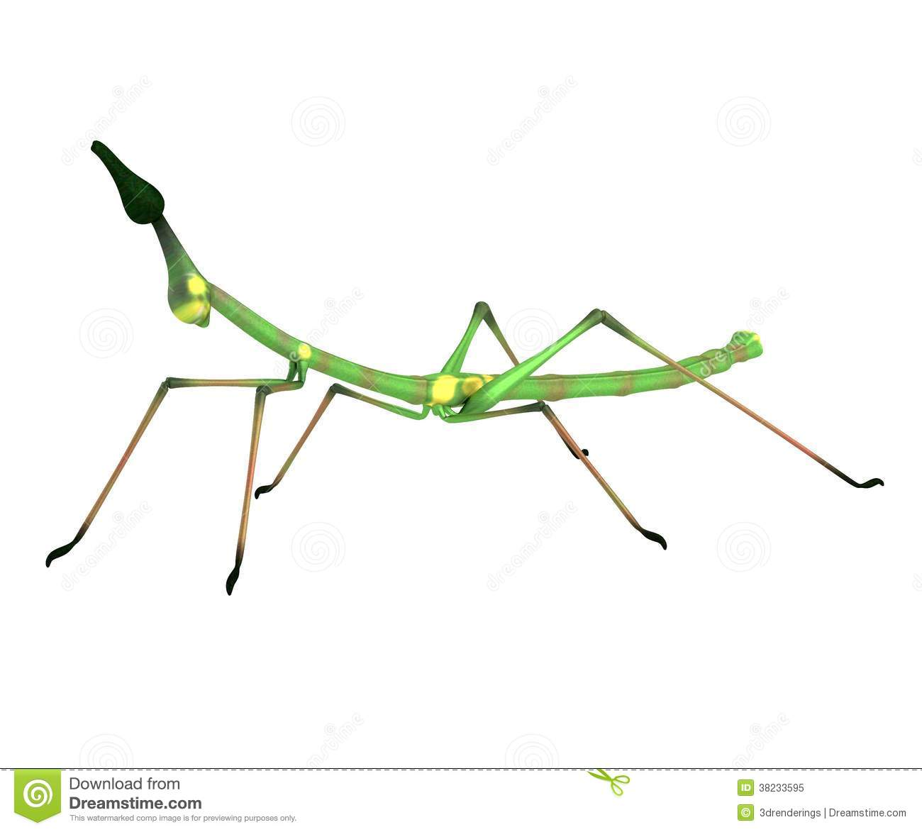 Stick Insect Stock Illustrations.