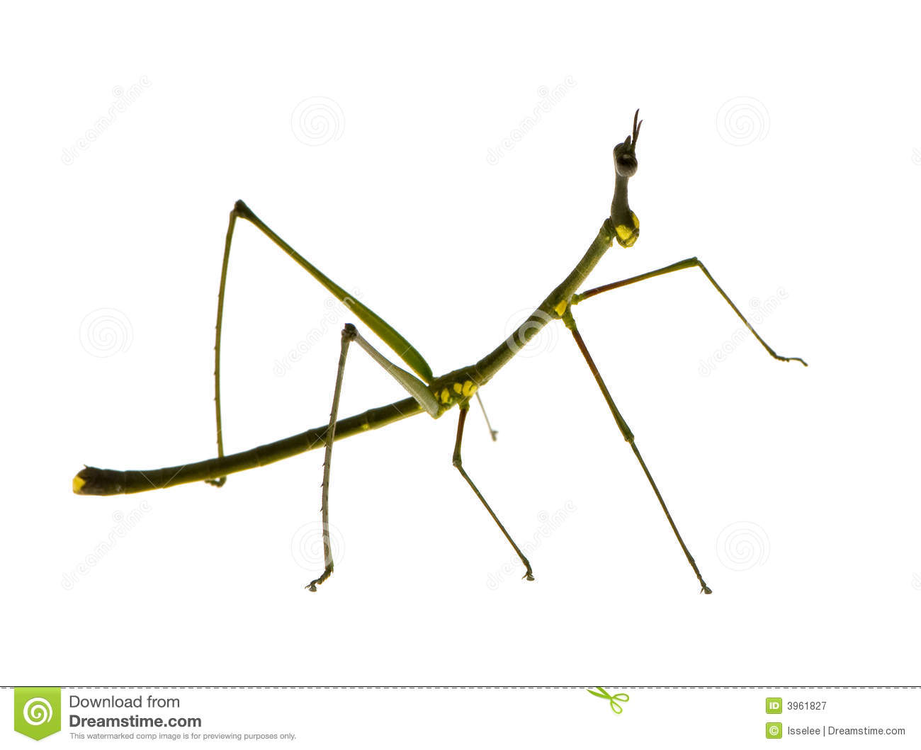 Stick bug clipart.