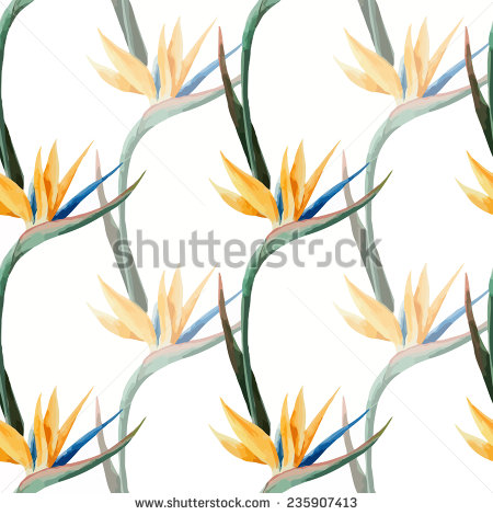 Strelitzia Flower Stock Photos, Royalty.