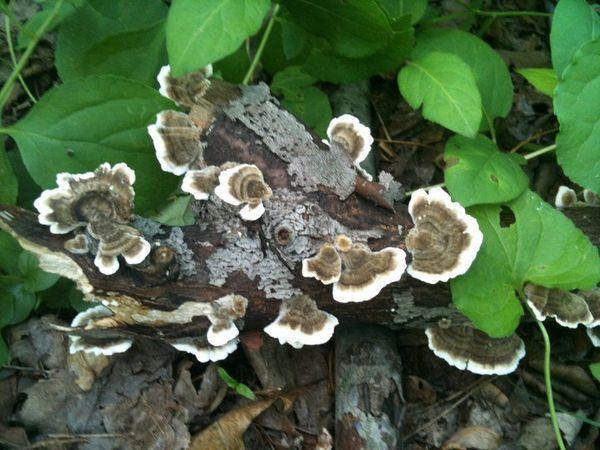 Mushrooms and Literature.