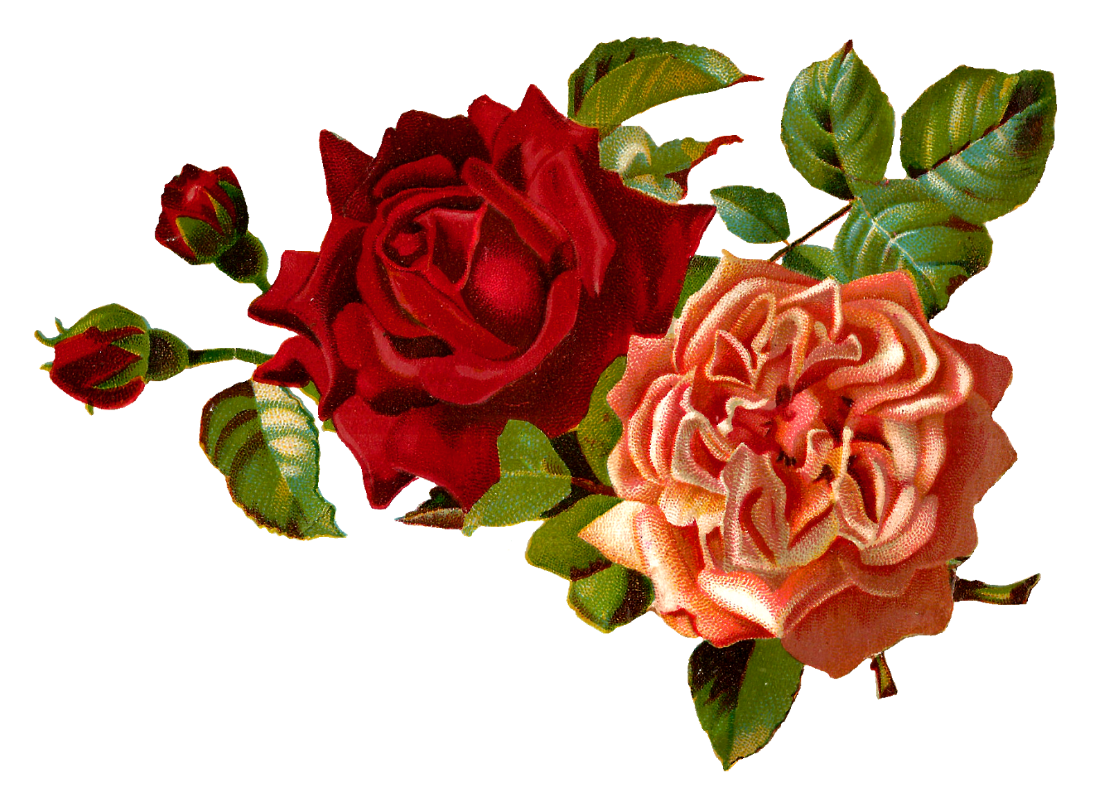 Single Red Rose Flower Stock Images: Stock Rose Clipart 20 Free Cliparts