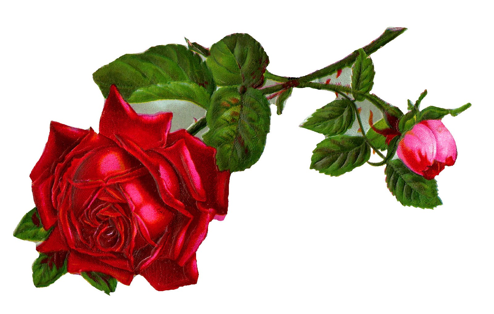 Antique Images: Stock Red Rose Digital Clip Art.