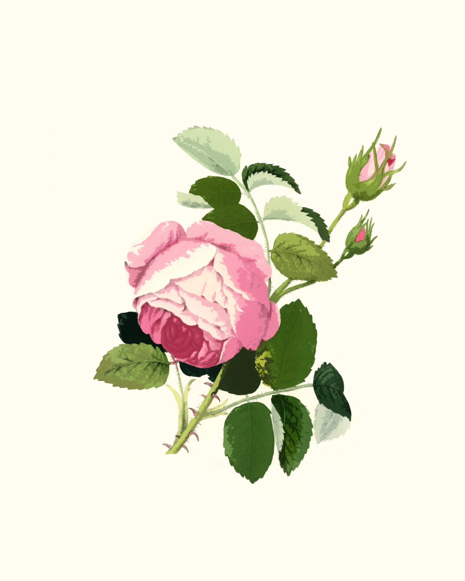 Pink Rose Clipart Free Stock Photo.