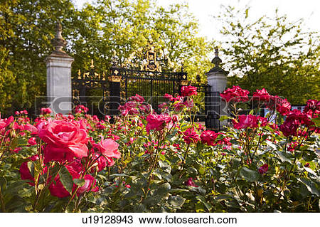 Stock Photo of Queen Mary Rose Garden u19128943.