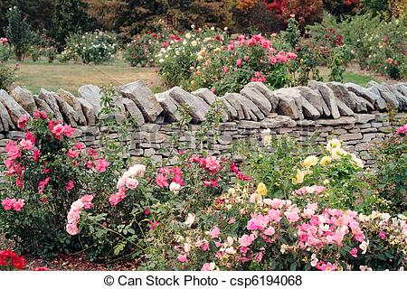 Pictures of Rose Garden.