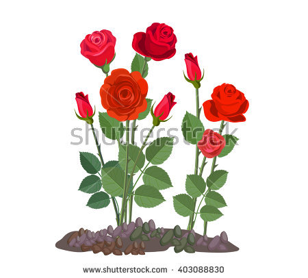 Rose Garden Stock Images, Royalty.