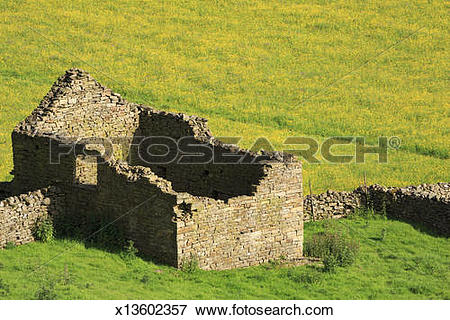 Picture of Stone barn and buttercups in Swaledale x13602357.