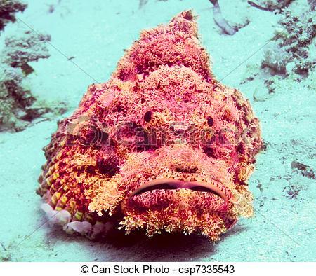 Stock Photos of Stonefish.