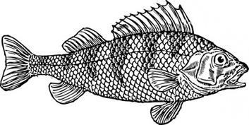 Grayscale Colored Stone Fish Free Vectors.