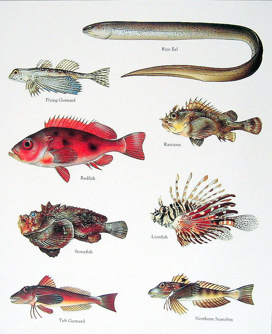 Rice Eel Redfish Lionfish Stonefish 1984 by mysunshinevintage.
