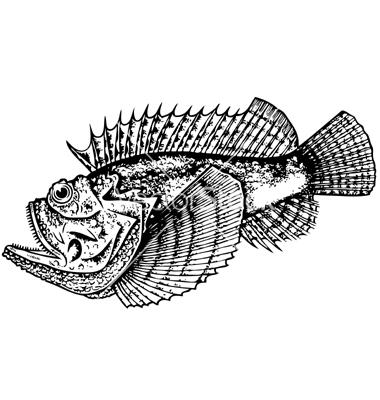 Stonefish vector by barbulat.