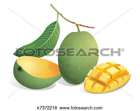 Stone fruit Clipart Illustrations. 382 stone fruit clip art vector.