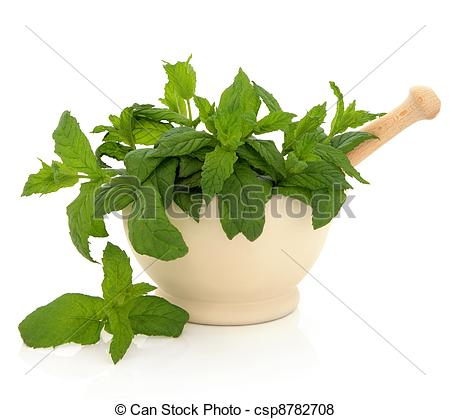 Pictures of Mint Herb Leaves.