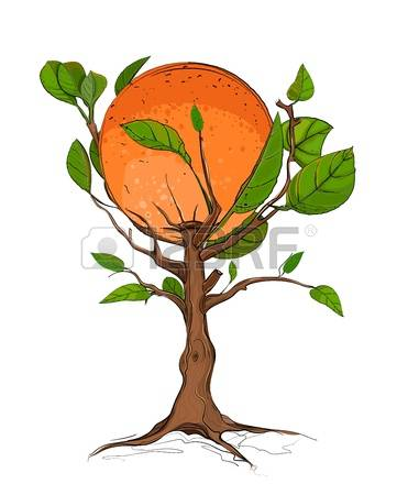 Citrus Tree Images & Stock Pictures. Royalty Free Citrus Tree.