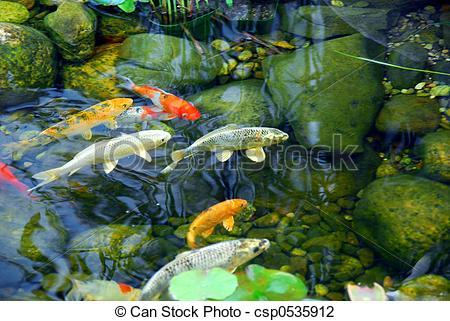 Stock Photo of Koi pond.