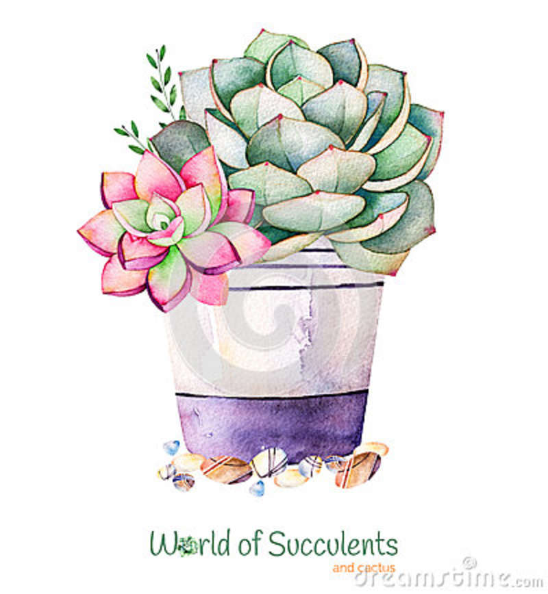 Watercolor Handpainted Succulent Plant In Pot And Pebble Stone.