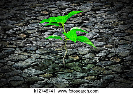 Clipart of Small plant growing from a stone k12748741.