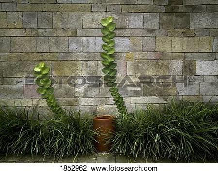 Stock Photo of Como Shambhala Estate, Bali, Indonesia; Plant.
