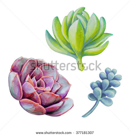 Watercolor Succulent Clip Art Stock Images, Royalty.