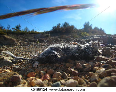 Stock Photo of Dead rat lying on a stony soil, with the sun.