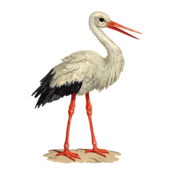 Storch Png.
