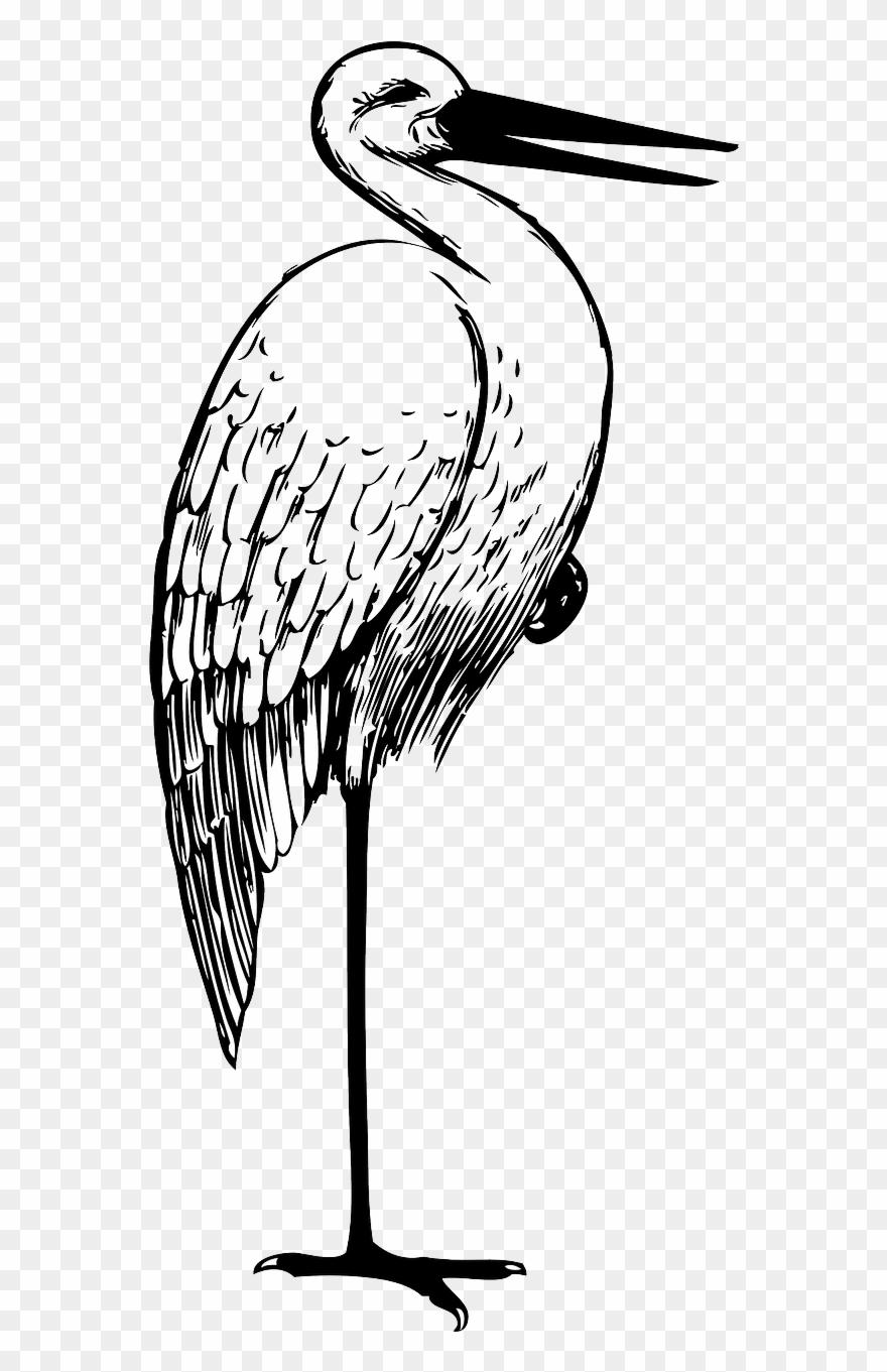 Stork Clipart Black And White.