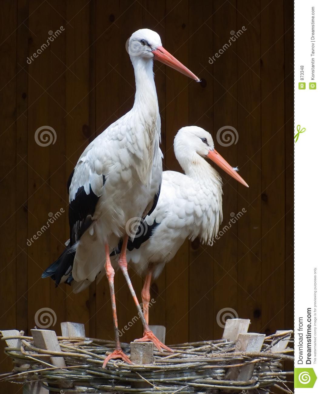 Couple Stork Royalty Free Stock Photos.