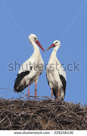 Stork Nest Stock Photos, Royalty.