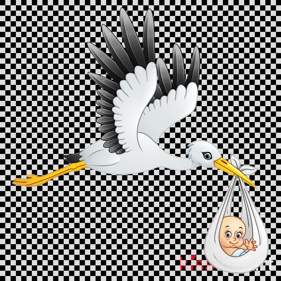 bird stork beak ciconiiformes white stork clipart.