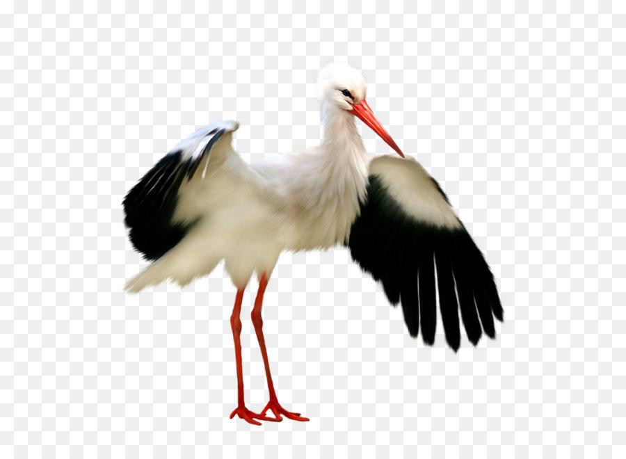 Crane Bird png download.