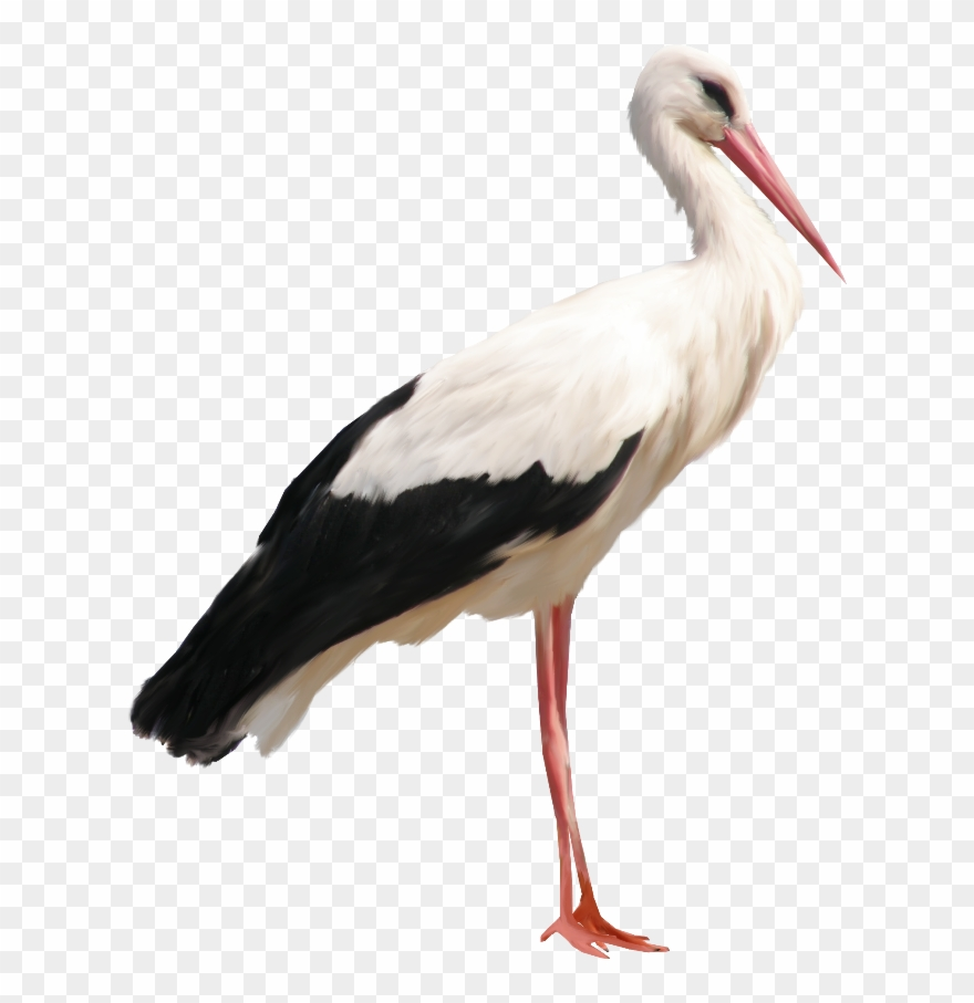 Stork Png Clipart (#3694140).