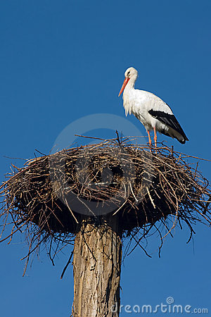Stork Nest Stock Photos, Images, & Pictures.