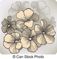 Vectors Illustration of Geranium or Storksbill or Pelargonium sp.