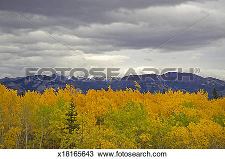 Stock Photo of Storm clouds gathering over aspen forest, Canada.