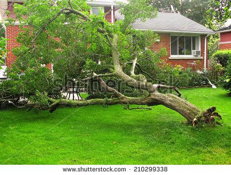 Fallen Tree Stock Photos, Royalty.