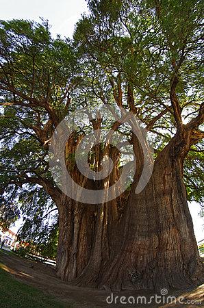 Tree Of LIfe (fish Eye) Royalty Free Stock Photo.