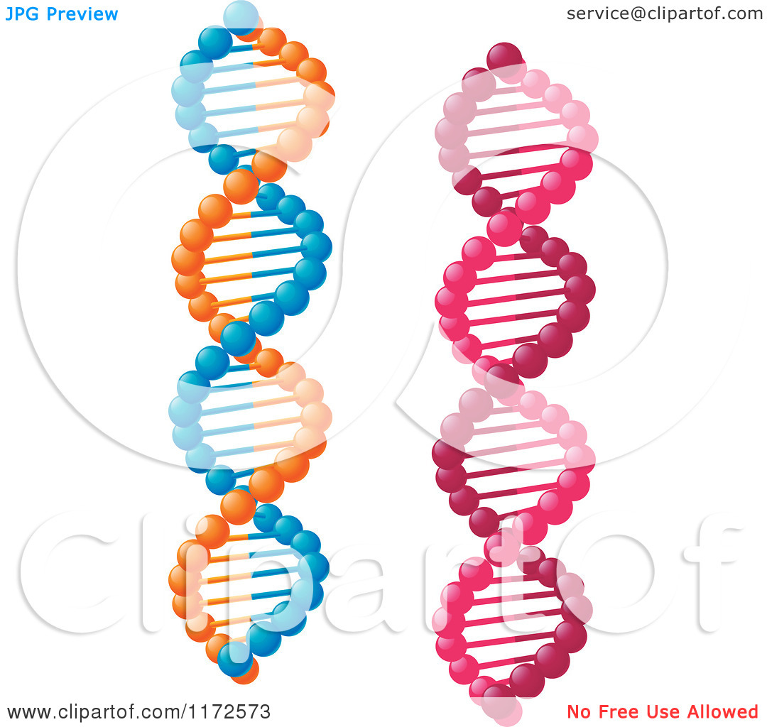 Clipart of Pink and Orange and Blue Dna Strands.