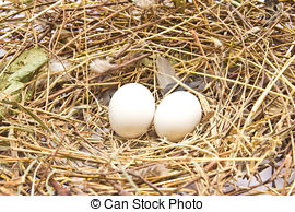 Stock Photography of Two Eggs on Straw Bedding.