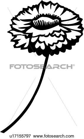 Clip Art of , flower, straw flower, varieties, u17155797.